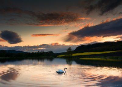 swan#6
