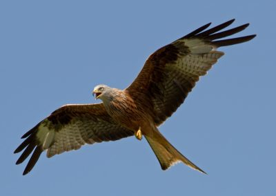 Red Kite Centre At Brahan